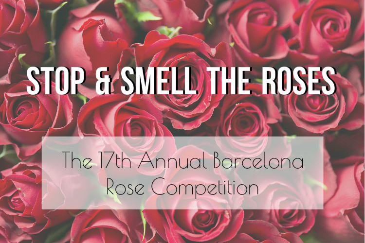 rose competition 2017