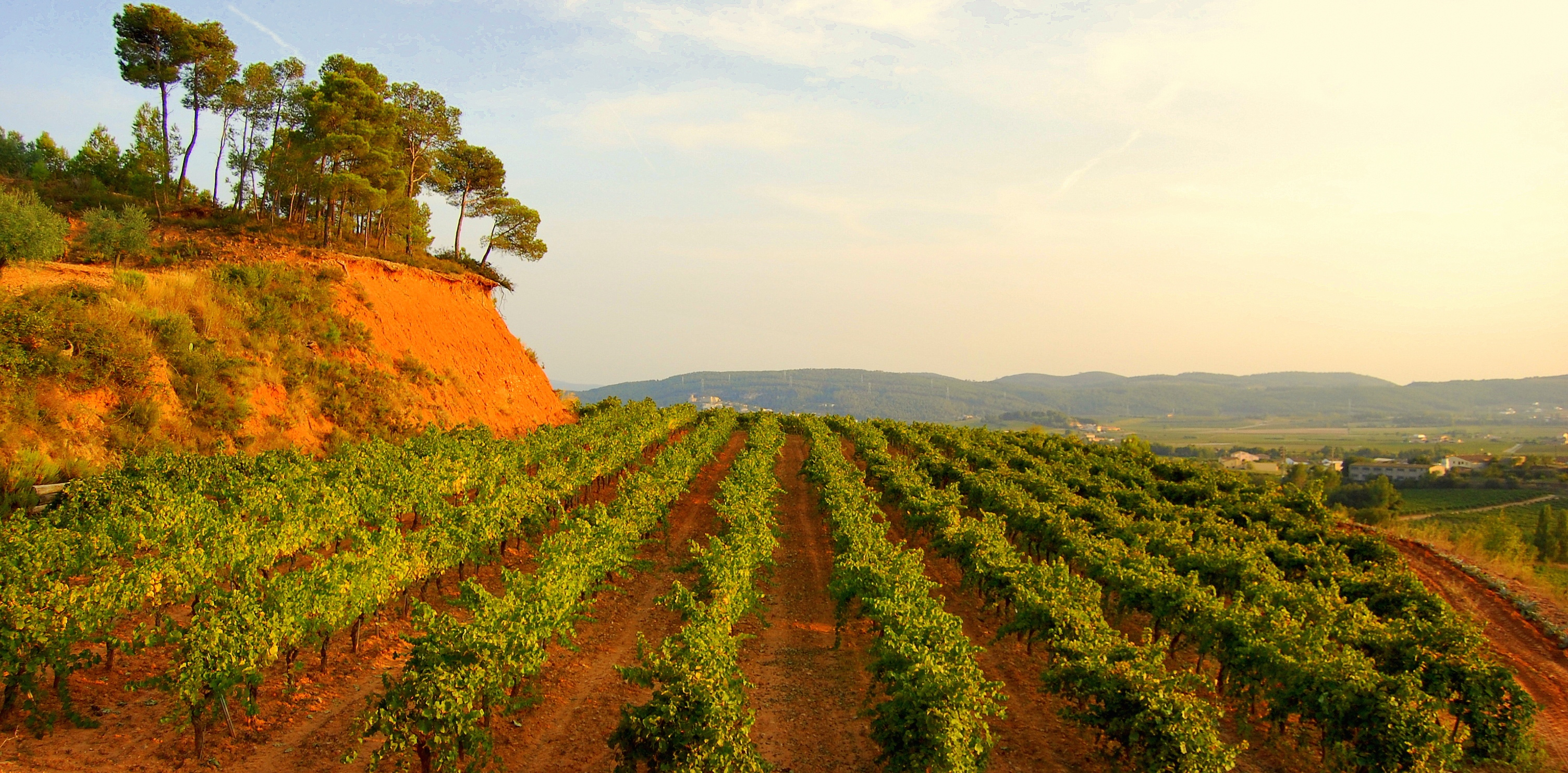 spanish wine - PENEDES